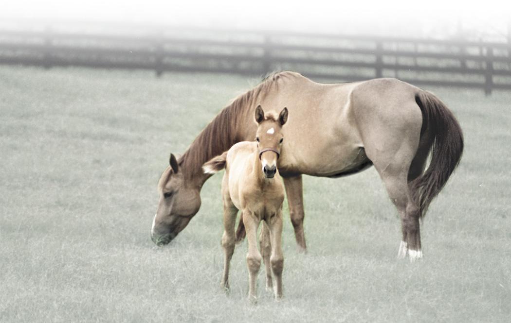 mare_foal_edge_0618